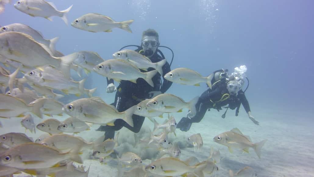 Fischschwarm Teneriffa