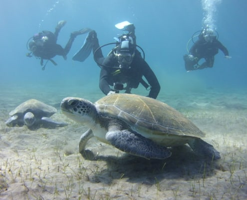 Tauchplätze Abades Schildkröten