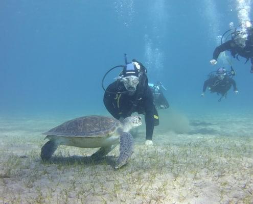 Tauchkurse Schnupperkurs Schildkröte