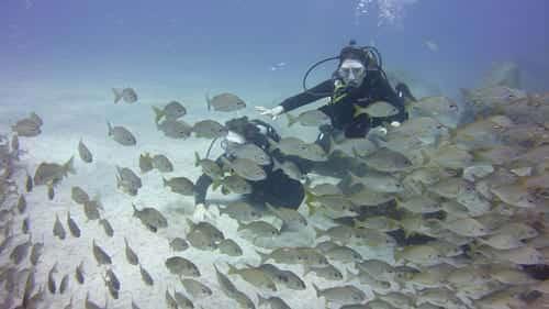 Tauchkurse Schnuppertauchen Fische