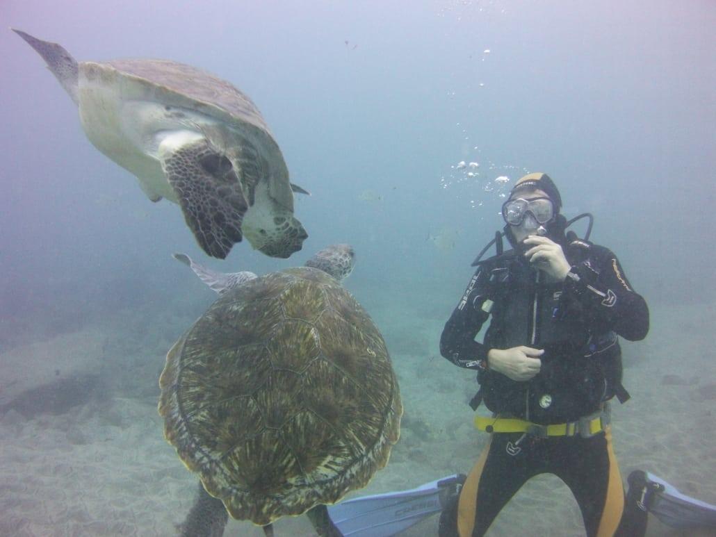 Meeresschildkröen
