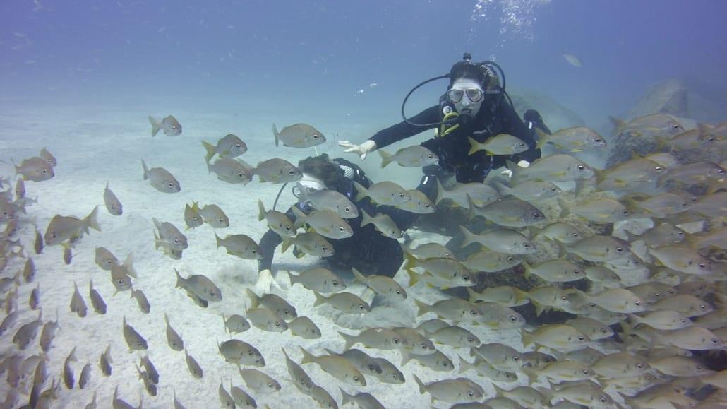 Schnuppertauchen mit Fischen