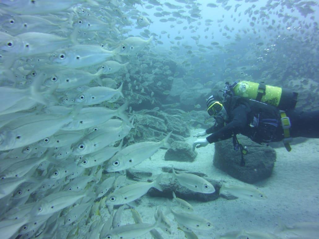 Tauchen mit vielen Fischen auf Teneriffa