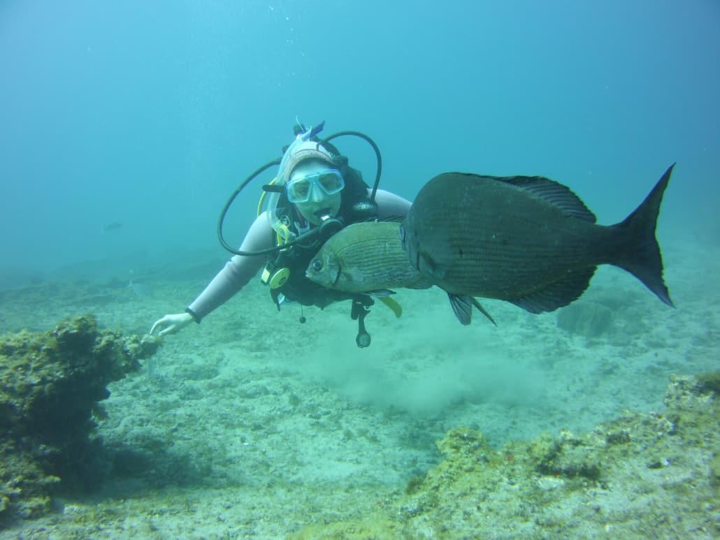 Tauchen mit Fischen auf Teneriffa