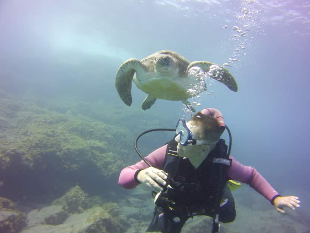 Unterwasserschildkröte